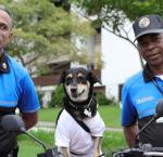 The dog Rosy with the security personnel of the Electoral Tribunal of the Republic of Panama.
