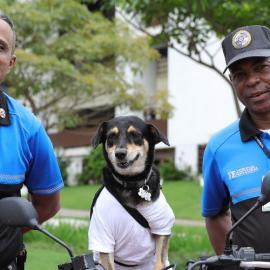 La perrita Rosy junto al personal de seguridad del Tribunal Electoral